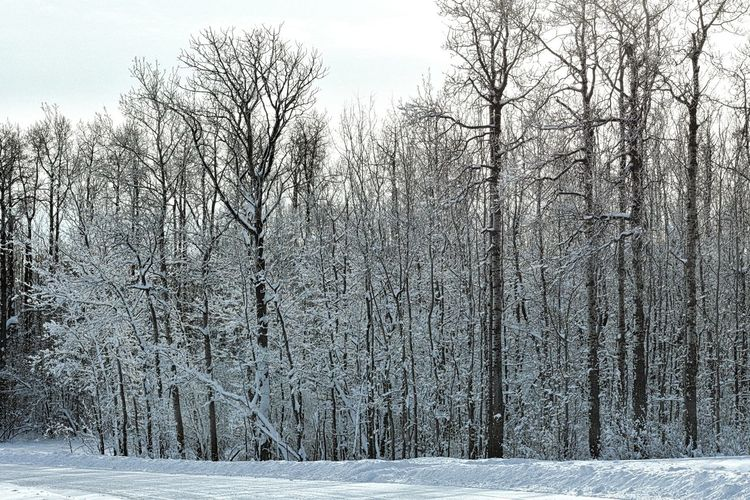 Frozen Trees Afterthestorm  Canada Nikon EyeEm Nature Lover Scenic Landscape No Animals Ice Road Country Road Trees Sky Snow Winter Cold Temperature Tree Nature Outdoors Day No People Beauty In Nature Tranquility Sky EyeEmNewHere