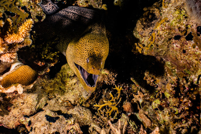 Moray eel and coral in sea