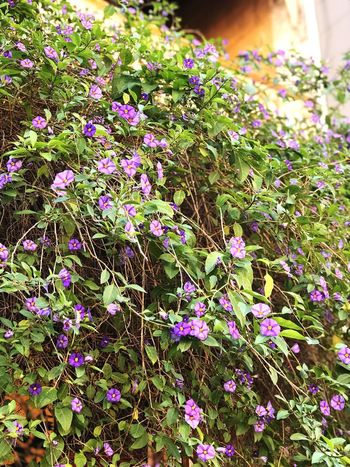 This tree of purple flowers is so eye catching. The Power Of Flowers Plant Growth Day Beauty In Nature Flowering Plant Nature Flower Outdoors