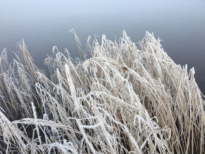 High angle view of frozen grass against sky