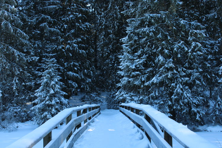 Snow Winter Plant Cold Temperature Forest Tranquil Scene White Color Nature Outdoors The Way Forward Beauty In Nature Bridge