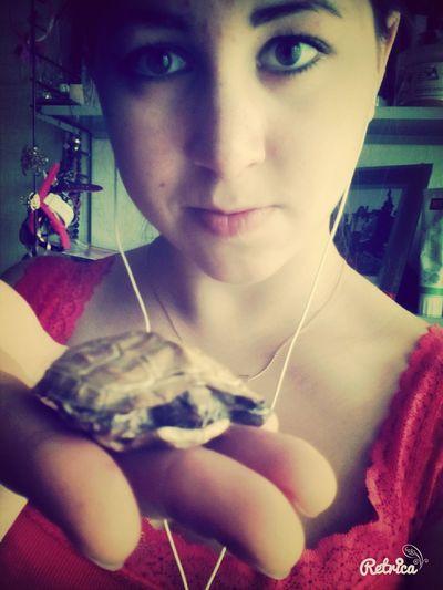 Черепашка черепаха Cheese! утипути Selfie