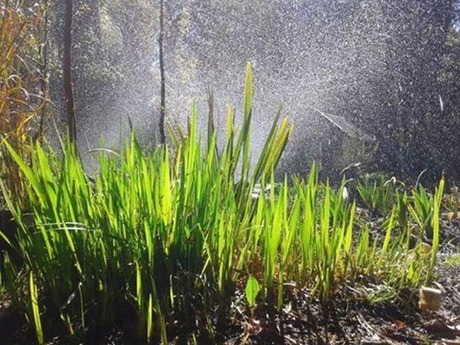 Plants Nature Vivero Naturaleza