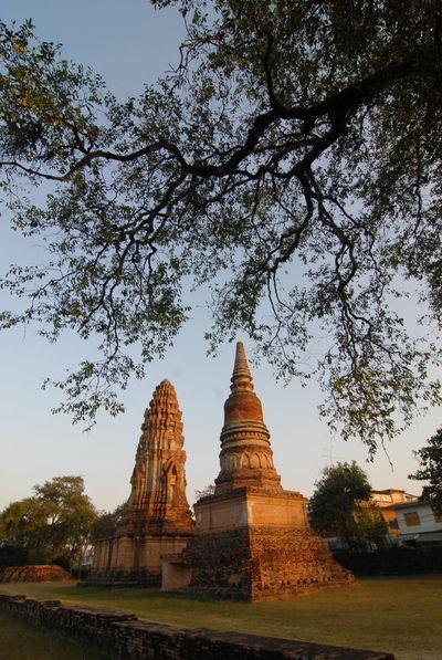 Ancient Civilization Historic History Lopburi Thailand Place Of Worship Religion Travel Destinations Tree