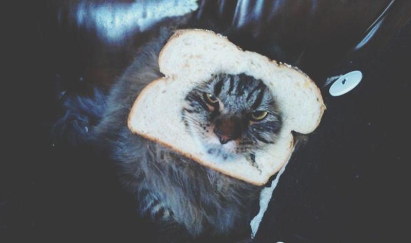 Angrycat Cutie TurnUp