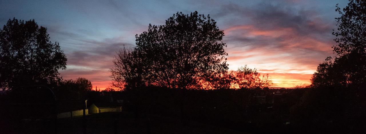Sky Sunset Tree Cloud - Sky Idyllic Dusk Dramatic Sky Outdoors Orange Color Tranquility