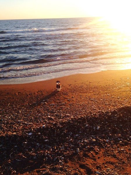 Dog Sea Nature Horizon Over Water Beauty In Nature Beach Sunset Scenics Shore Outdoors Sand Water Tranquility Tranquil Scene One Animal Animal Themes Wave Day No People Sky Mammal