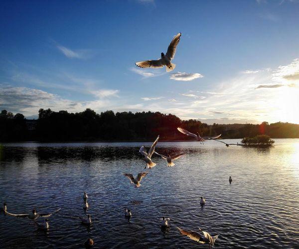 Seagulls Sunset Oslo Norway
