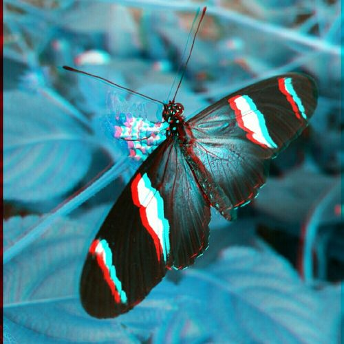 Butterfly Insects  3Dart 3dpicture Photoart EyeEm Nature Lover Insect_perfection Insect Photography Nature Photography Nature