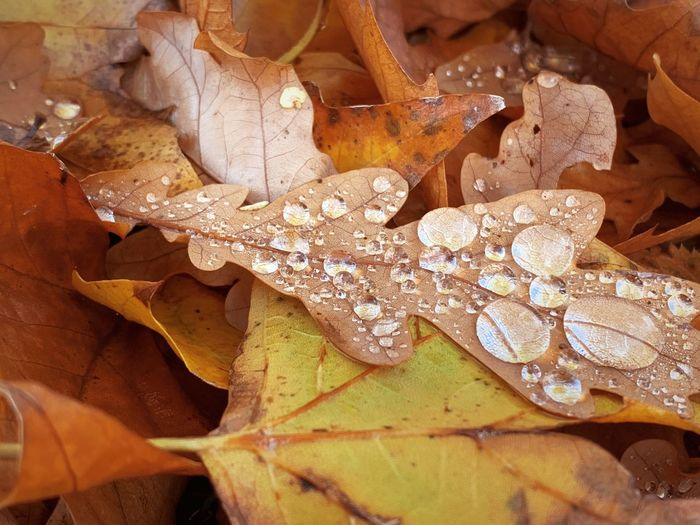 Close-up of water drops on dry leaves