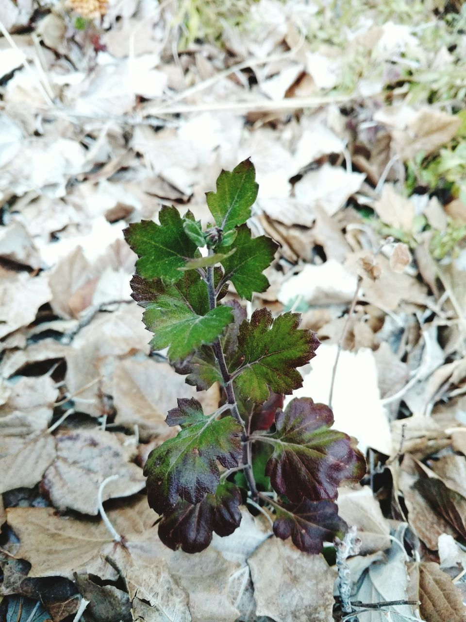 Close-Up Of Plants Growing On Field Covered With Autumn Leaves