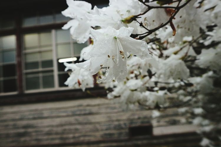 Low angle view of white blossom