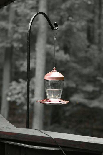 Hummingbird Feeder Watching Humming Birds Nature Photography Nature EyeEm Nature Lover