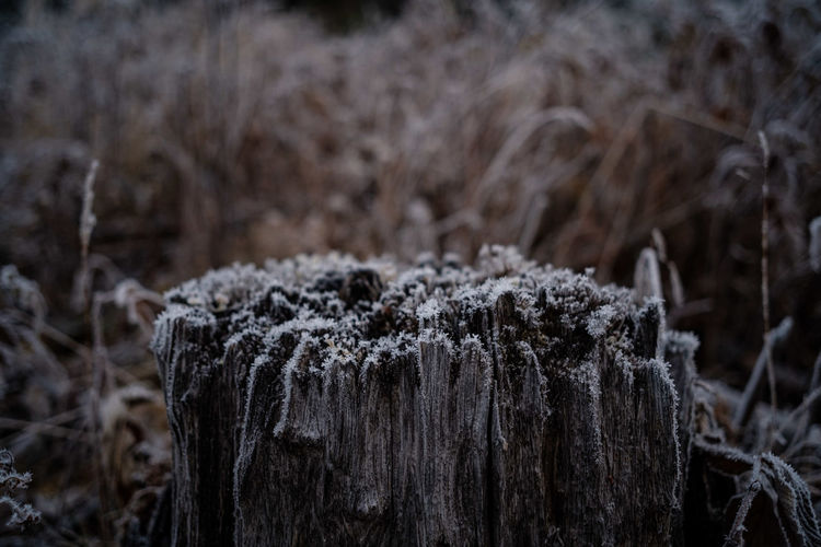 Close-up of frosted tree stump on field