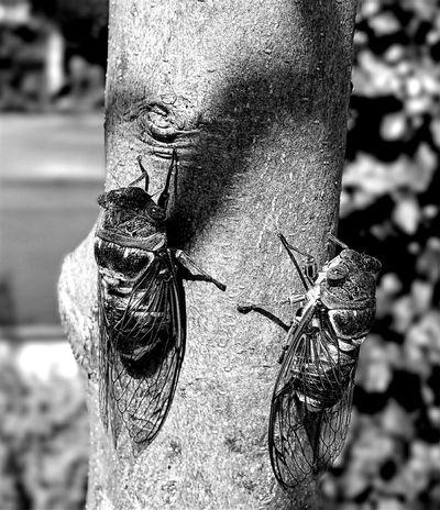 Summer ☀ Été Cigales Cigale Pets Corner B&w Photography B&w Nature