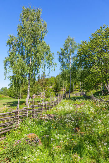 Wild flowers on a summer meadow in a rural landscape with wooden roundpole fence Picket Fence Rural Rustic Sweden Wildflower Wood Beauty In Nature Birch Tree Fence Flower Flowers Green Color Idyllic Landscape Meadow Nature No People Nordic Old Outdoors Pole Fence Scenics Summer Tree Wooden
