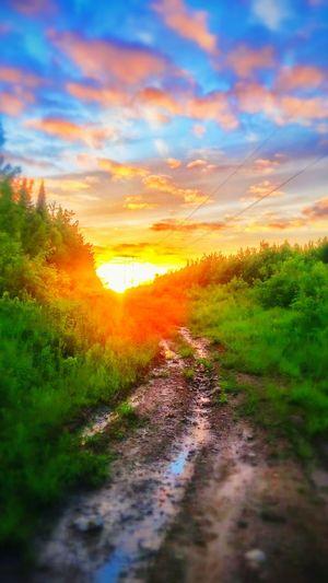 Colorful Sunset Nature Trees Wonder Happiness Trailshots