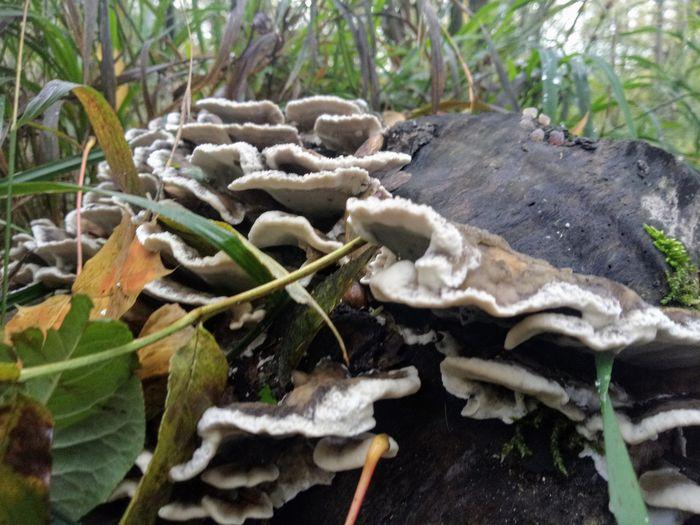 pilz an baumstumpf Mushrooms Funghi🍄 Funghi Close-up Close-up Plant