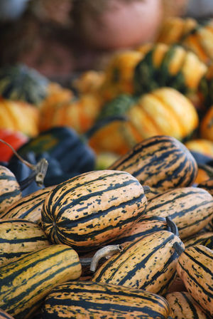 Delicata Squash Autumn Farmers Market Abundance Delicata Delicata Squash Fall Farmstand Food Food And Drink For Sale Healthy Eating Market Stall Squash - Vegetable Still Life Vegetable Vegetables