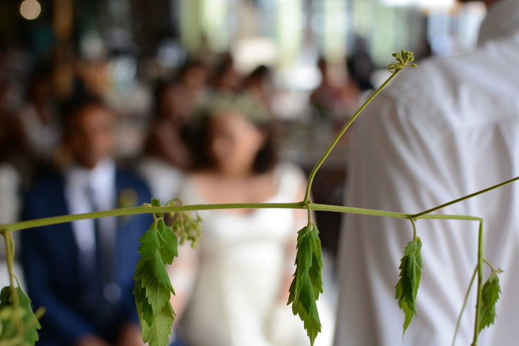 Close-Up Of Plant Against Newly Wed Couple