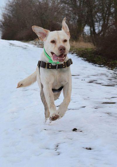 Dog playing on snow
