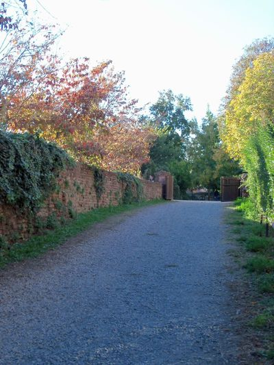 #italy #pavia Autumn Empty Road Nature Tranquil Scene