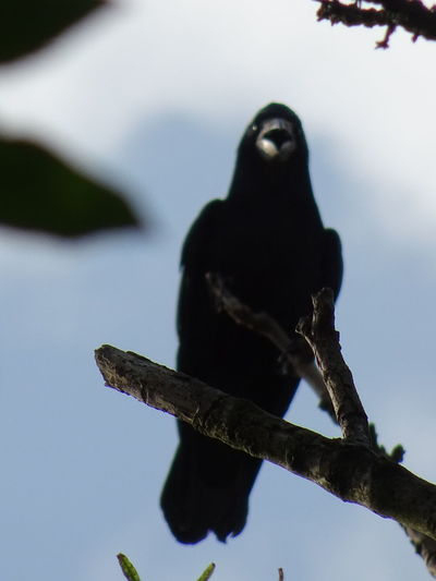 To Day Was A Good Day Raven Scary Bird