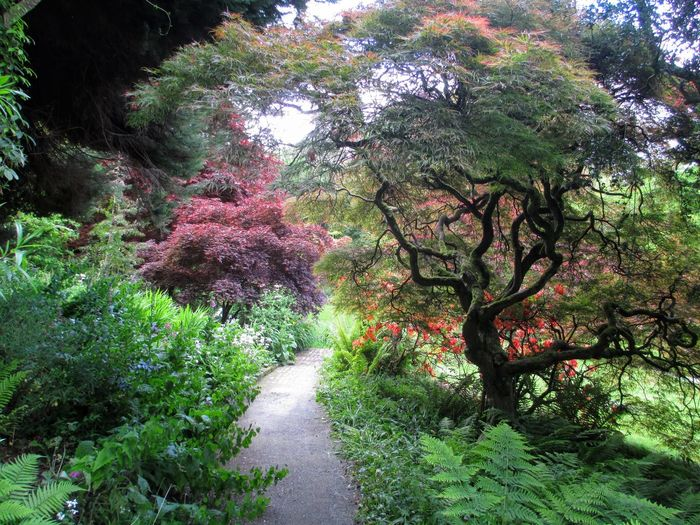 Beauty In Nature Day Green Color Ireland Mount Usher Gardens Nature Outdoors Park Tranquility Tree The Great Outdoors - 2016 EyeEm Awards