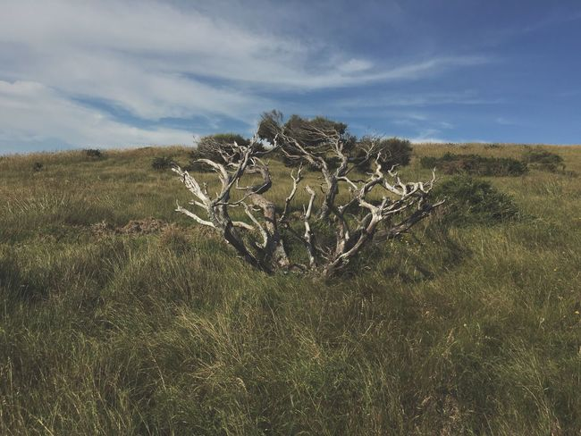 Lay Down. Grass Grassy Windblown Nature Raglan Singular Tree Shrub Landscape Sky Tranquil Scene Solitude No People New Zealand Textures Sunny Day