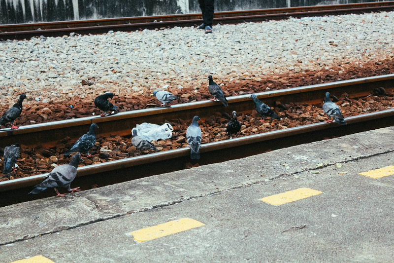 Dove Doves Day High Angle View No People Outdoors Railroad Track นก
