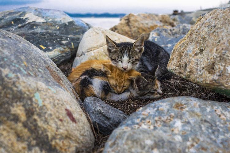 Cat relaxing on rock