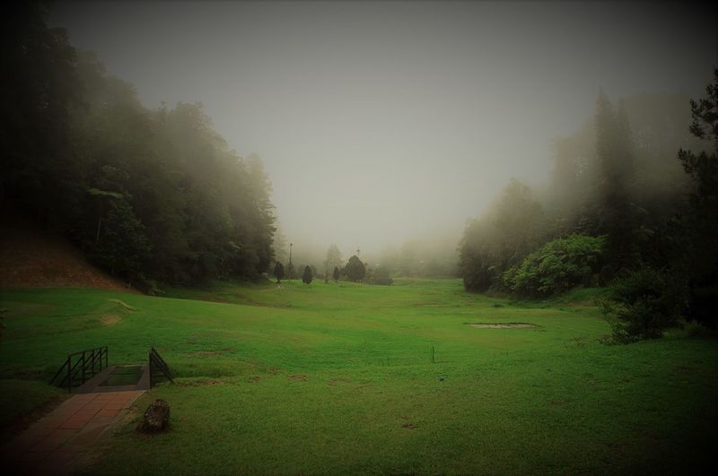 Beauty In Nature Day Fog Golf Golf Course Landscape Nature No People Outdoors Tranquility Tree