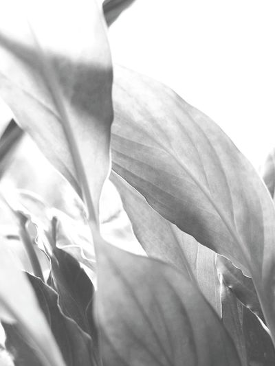 Morning breath Close-up Plant Growth Beauty In Nature No People Nature Flower Outdoors Day Flower Head Freshness Desaturated Black And White Indoors  Beauty In Nature Fragility BackgroundsNature Leaf 🍂 Movement Garden Love Clean Air Morning Light