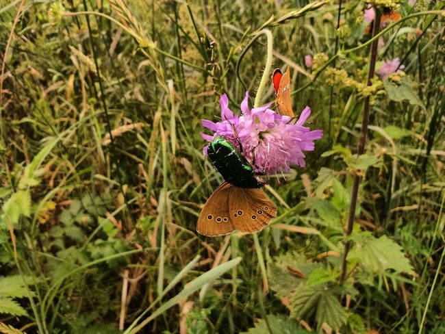 Nature Insect Flower Growth Plant High Angle View Animal Themes One Animal Animals In The Wild Outdoors No People Day Fragility Beauty In Nature Butterfly - Insect Leaf Flower Head Grass Freshness Close-up Butterfly