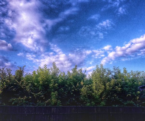 View of trees against cloudy sky