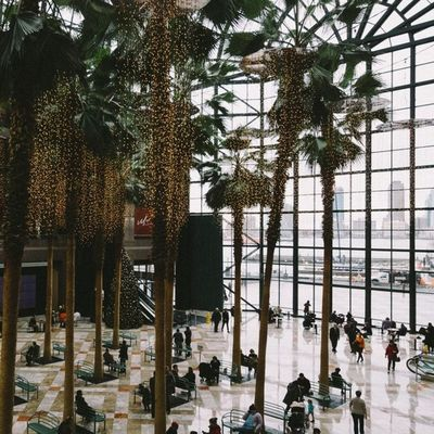 Love this place 👌 Wintergarden WorldFinancialCenter NYC Manhattan Winter Christmas Christmas2012 USA Skyscraper Cityscape Citylights Building Palms Christmaslights Newyork Empirestate Publicbuilding Vvfriday Vscovisual Vsco_of_our_world Vscocam VSCO Manhattanisland WorldTradeCenter The Architect - 2016 EyeEm Awards