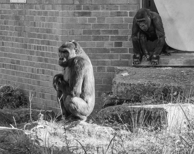 Monkey sitting on a wall