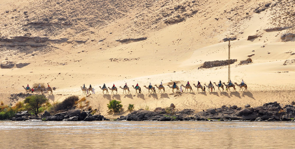 camellos en egipto Beauty In Nature Camellos Egipto Day Desert Flamingo Landscape Large Group Of Animals Large Group Of People Mammal Men Nature Outdoors People Sand Sky Togetherness Water