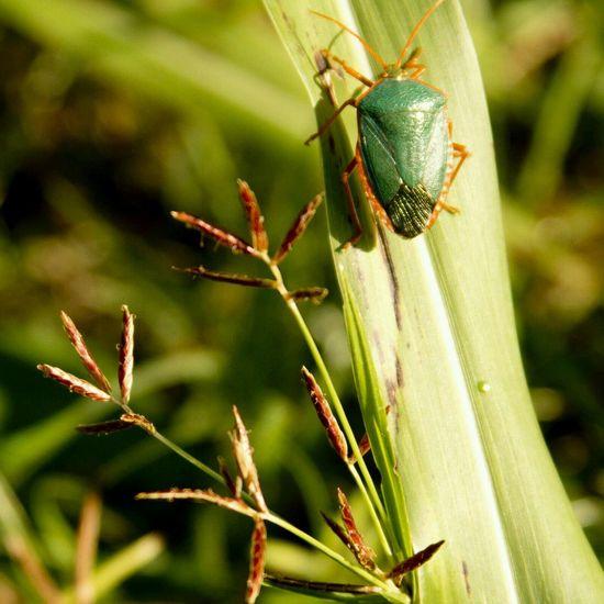 Bugslife Natural Photography