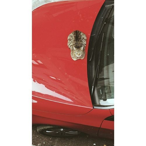 what a pitty for a kitty living in a city shajjsjsjsjsj yazmasam olurdum jsjajhs Cat OnTheCar Instapet Pet streetcat kitty instagood iger angrylooking instaphoto daily