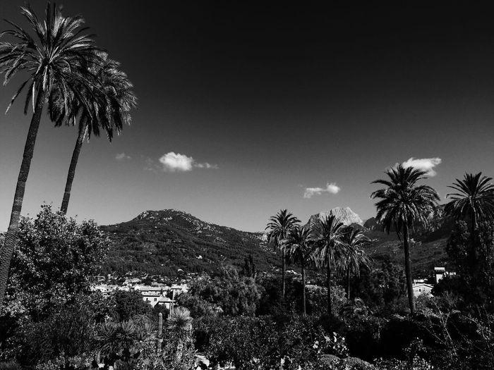 Traveling Soller Vscocam VSCO Travel Photography Mallorca Palma De Mallorca Black And White
