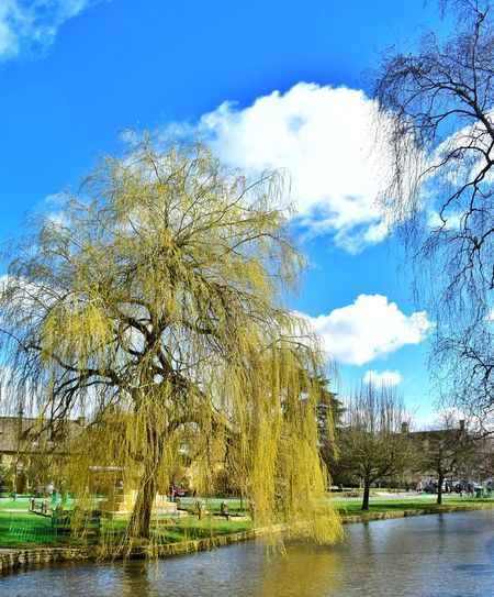 weeping willow Photowalktheworld Cotswolds Nikonphotographer Nikonphotography People Watching Picturesque Scenery Village River Tree Water Lake Sky Cloud - Sky Willow Tree Growing Countryside Tranquility Idyllic Tranquil Scene Calm Streaming Greenery Country House