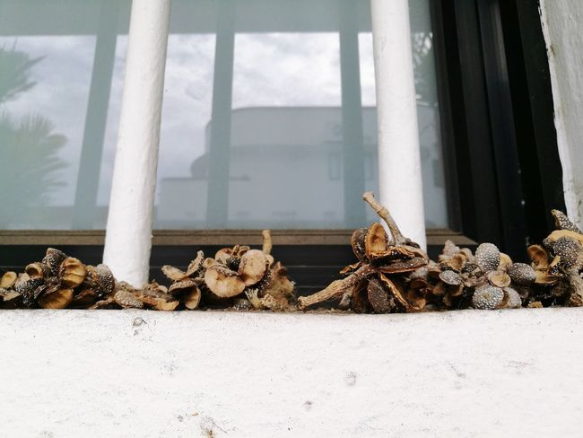 Reflections Reflection Window Reflections Dried Flowers Dried Fruits Dried Nuts Dead Crap Abstract Window Sill Dried Seeds Seeds EyeEm Selects Deforestation Woodpile Pile Heap Environmental Damage Stack Garbage Dump Environmental Issues
