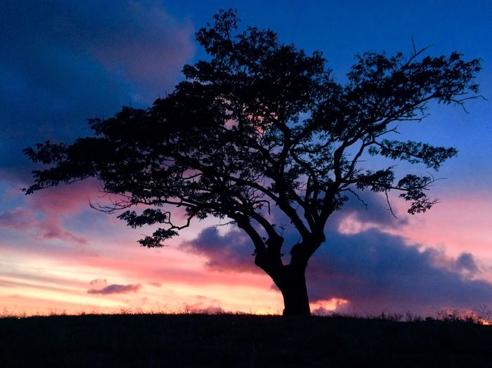 A sunset a day