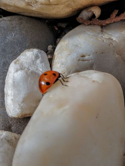 almost at the summit OnTheRocks! Minimal Animal Themes Ladybug Insect Close-up