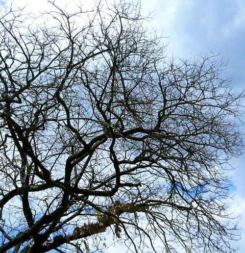 Taking Photos Beautiful Day Branches Tree Branches Bare Branches Tree And Sky Have A Nice Day♥ BE BLESSED