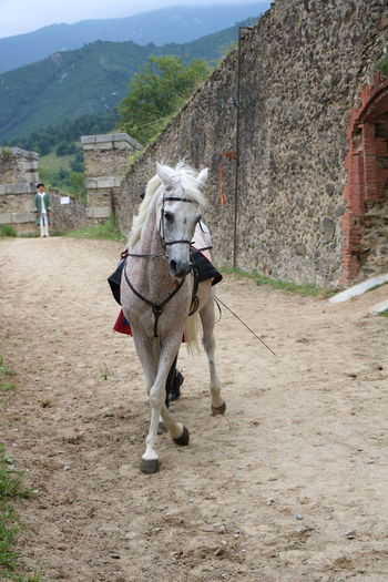 Fort Lagarde France Animal Themes Architecture Day Domestic Animals Horse Mammal Mountain Nature No People One Animal Outdoors Sky