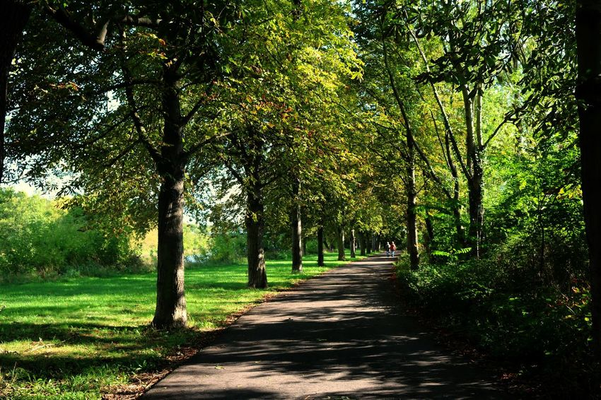 Halle (Saale), Peißnitz Beauty In Nature Day Grass Green Color Growth Halle (Saale) Landscape Nature No People Outdoors Peißnitzinsel Scenics The Way Forward Tranquil Scene Tranquility Tree Neighborhood Map