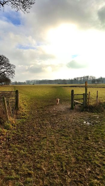 Walkies. Done. Sky Cloud - Sky Nature No People Tranquility Outdoors Tree Tranquil Scene Beauty In Nature Grass Day Scenics Spaniel Dogwalk Countryside Countrywalks Leicestershire