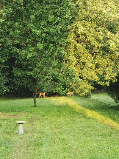 Deer Tree Water Field Grass Green Color